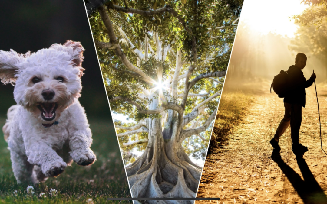 Course in Balanced touch™ animal communication